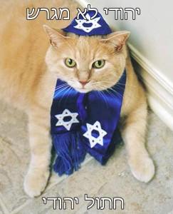 חתול לא מגרש חתול יהודי